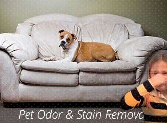 Pet Odor & Stain Cleaning Plantation